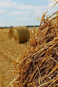 Лежать в стоге сена