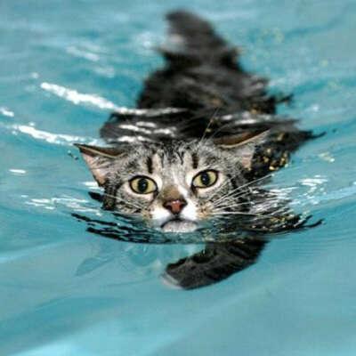 Хорошо плавать