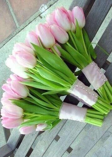 Белые и/или розовые тюльпаны