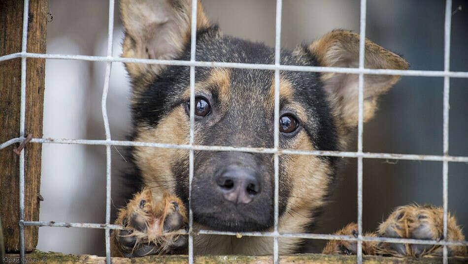 Открыть приют для бездомных и больных животных
