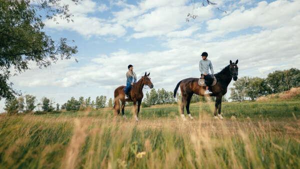 Катание на лошадях для двоих - Киев, подарочный сертификат на полуторачасовую прогулку на лошадях — bodo