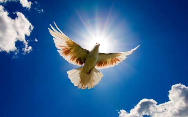 Мир во всем мире ~-~