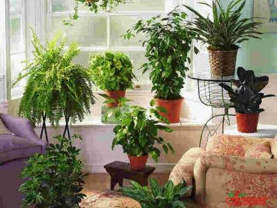 цветы и растения в горшках