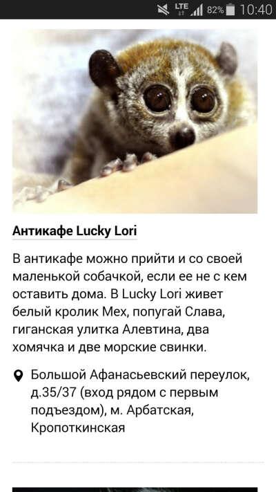 Посетить антикафе с животными*-*