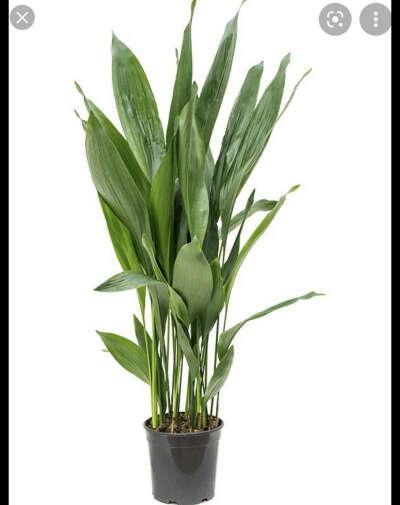 зеленое растение)()(
