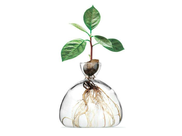Ваза для выращивания дерева из косточки АВОКАДО ВАЗА