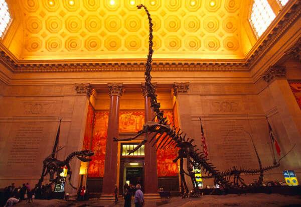 Посетить Американский Музей Естественной Истории