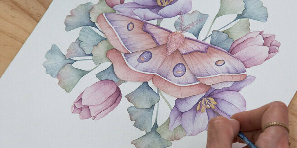 Naturalist Illustrations with Watercolors: Drawing and Composition. A course by Cristina Cilloniz , Botanical Artist and Illustrator