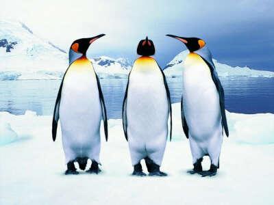 Обнять пингвина