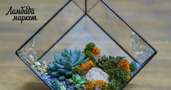 "Флорариум с суккулентами ""Куб"" в магазине «GLASS & GRASS» на Ламбада-маркете"