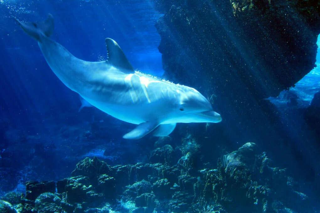 Поплавать в океане с дельфинами