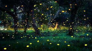 увидеть танец света жуков светлячков