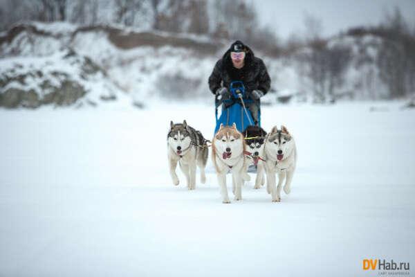 Прокатиться в упряжке собак