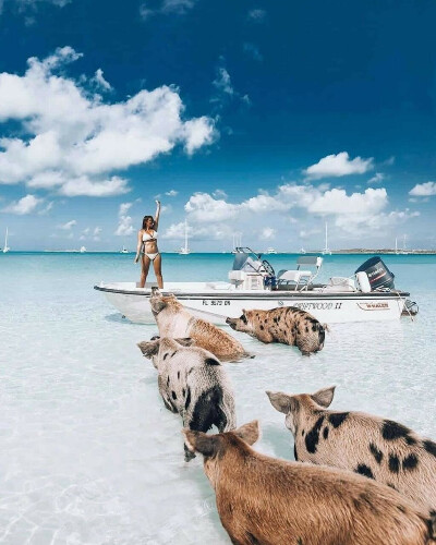 Пиг-Бич, Багамы