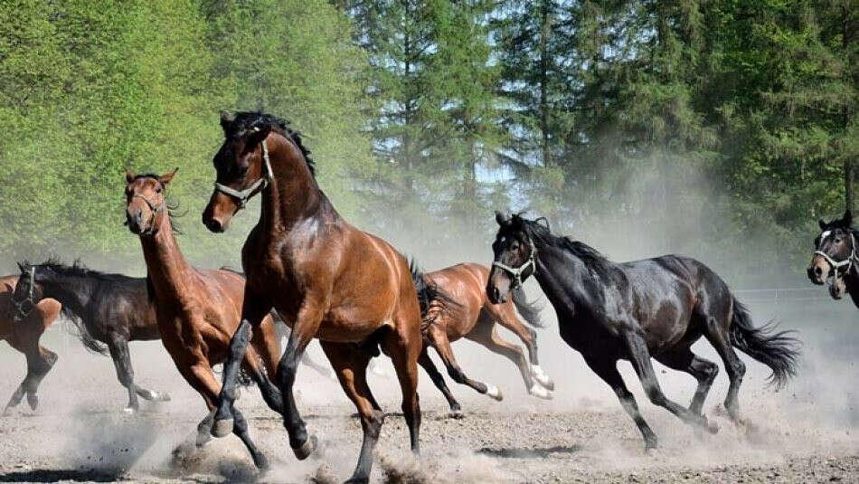 Тренировка в конном лагере в Англии