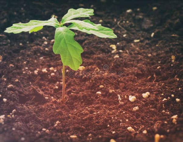 Вырастить дерево
