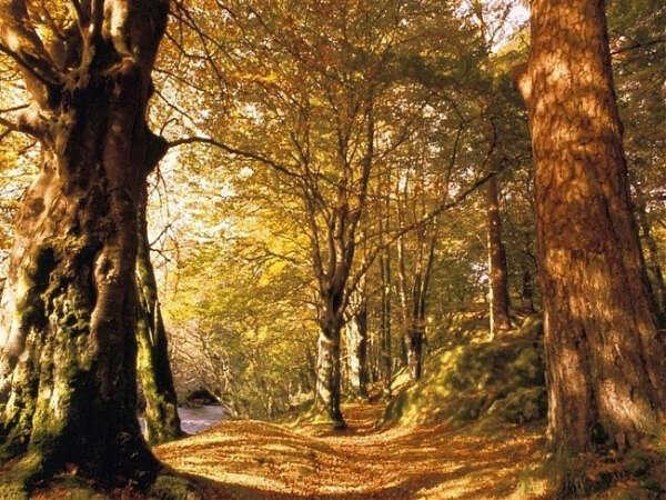 побыть в лесу
