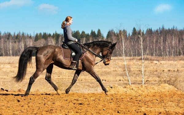 Абонемент на обучение конной езде