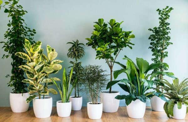 Небольшие комнатные растения, не требующие сложного ухода
