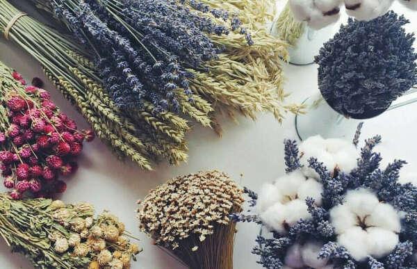 Сухоцветы ЛЮБЫЕ