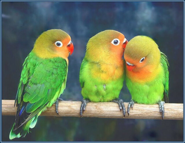 Попугай :з