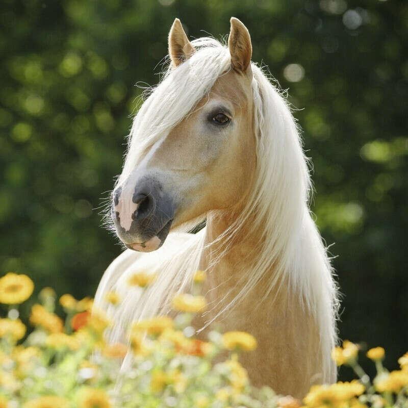 Съездить на ипподром и покататься на лошади
