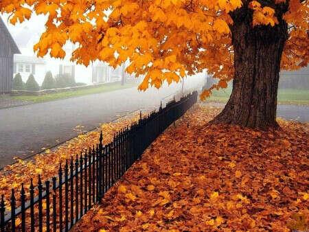 Хочу Осень:)