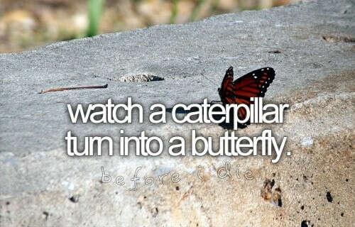 Увидеть превращение из гусеницы в бабочку
