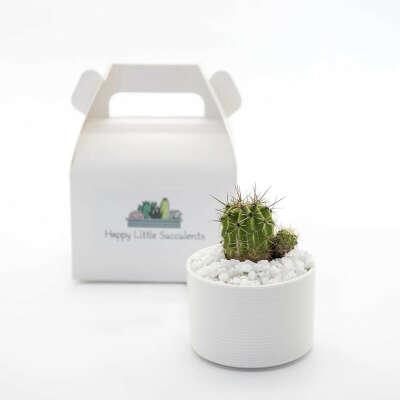 HAPPY LITTLE SUCCULENTS Cute Cactus