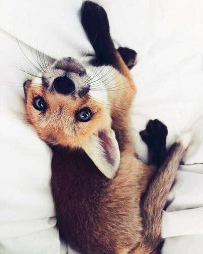 Хочу лисичку!! : )