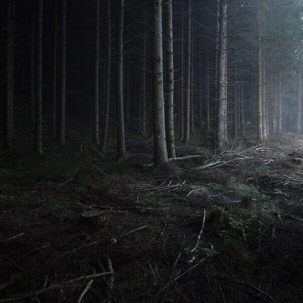 Погулять в лесу