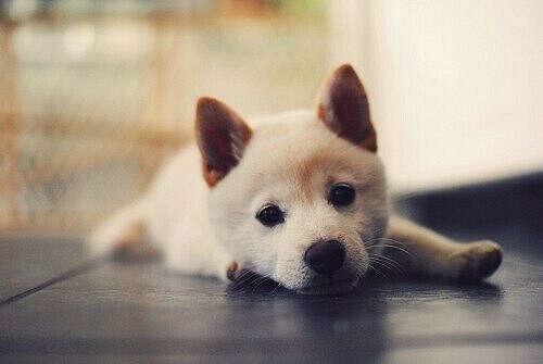 собаку