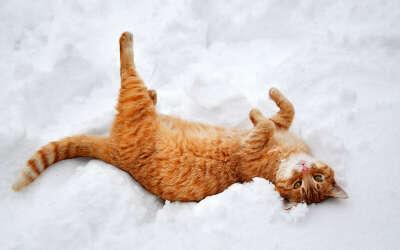 Валяться в снегу