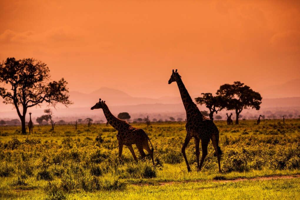 Сафари в ЮАР