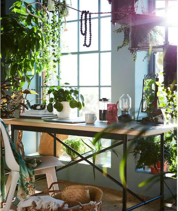 Красивые комнатные растения в красивых горшках