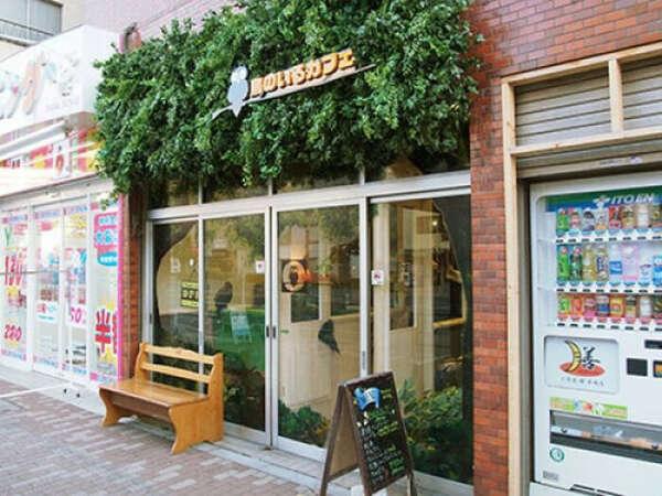 Посетить кафе с совами (Токио)