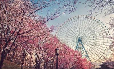 Весенний тур по Японии