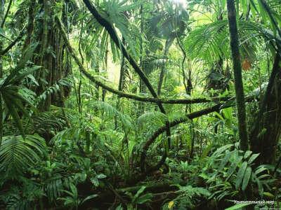 Побывать в джунглях