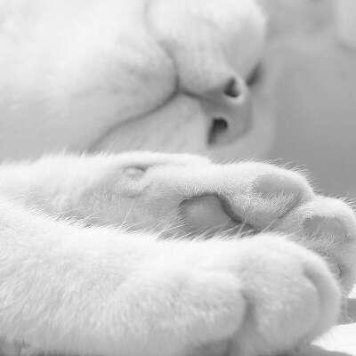 Котика :3