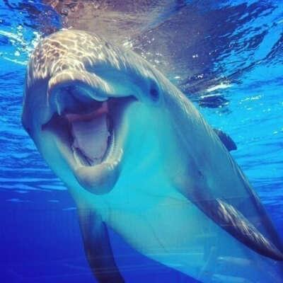 Погладить дельфина...)