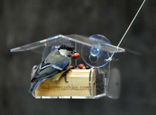 Оконная кормушка для птиц