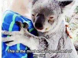 Подержать на руках коалу