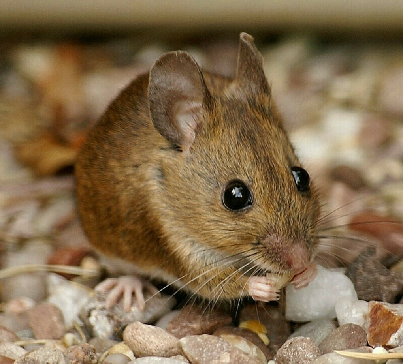 Лютая геймерская мышь