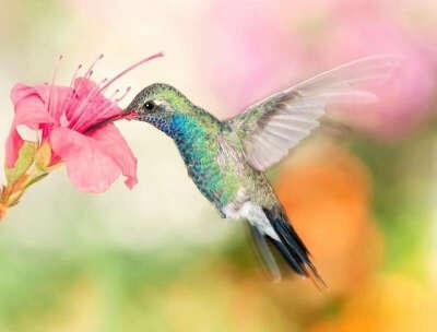 Увидеть колибри