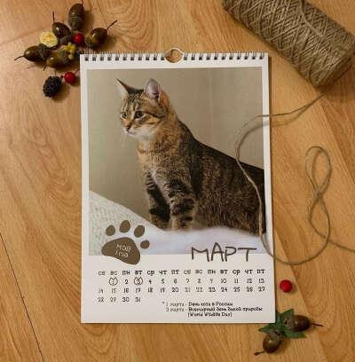 Настенный календарь с котами