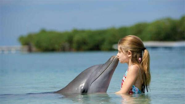 по плавать с дельфинами