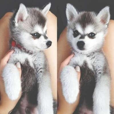 Хочу маленькую собачку)