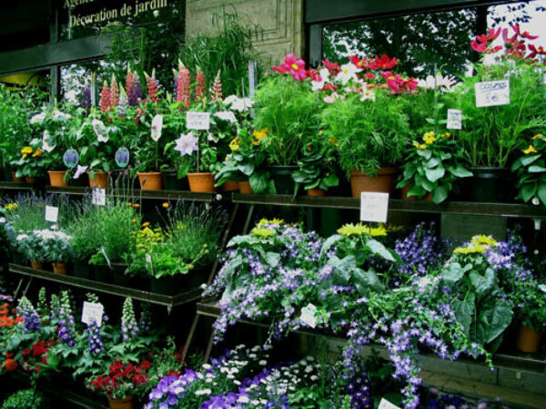 Свой цветочный магазин!