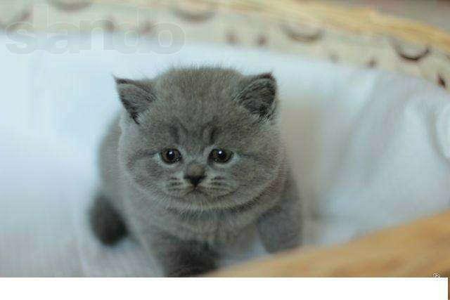 Хочу кота!