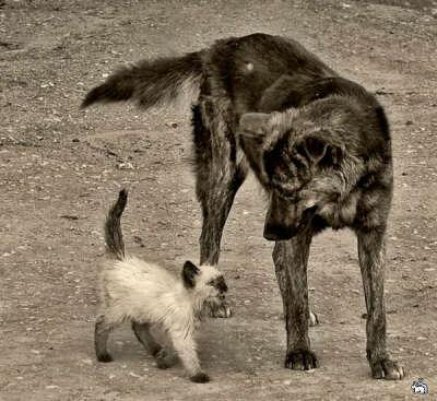 Я хочу, чтобы все бездомные животные пережили эту зиму!)